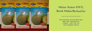 melon action 434,benih melon action 434,budidaya melon,benih melon,lmga agro