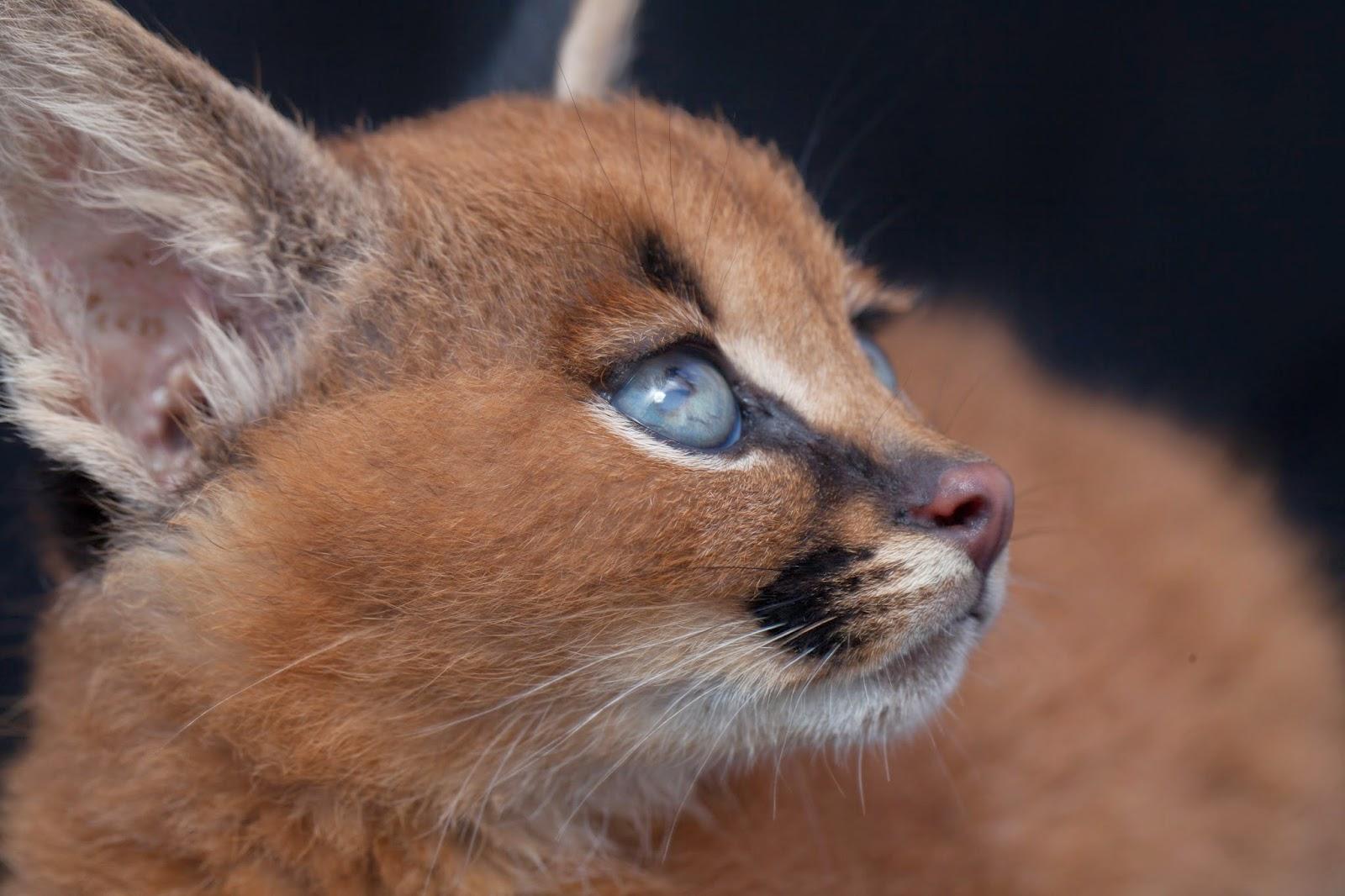 13 Hewan Paling Cantik Di Dunia Kabar Lucu Dan Unik