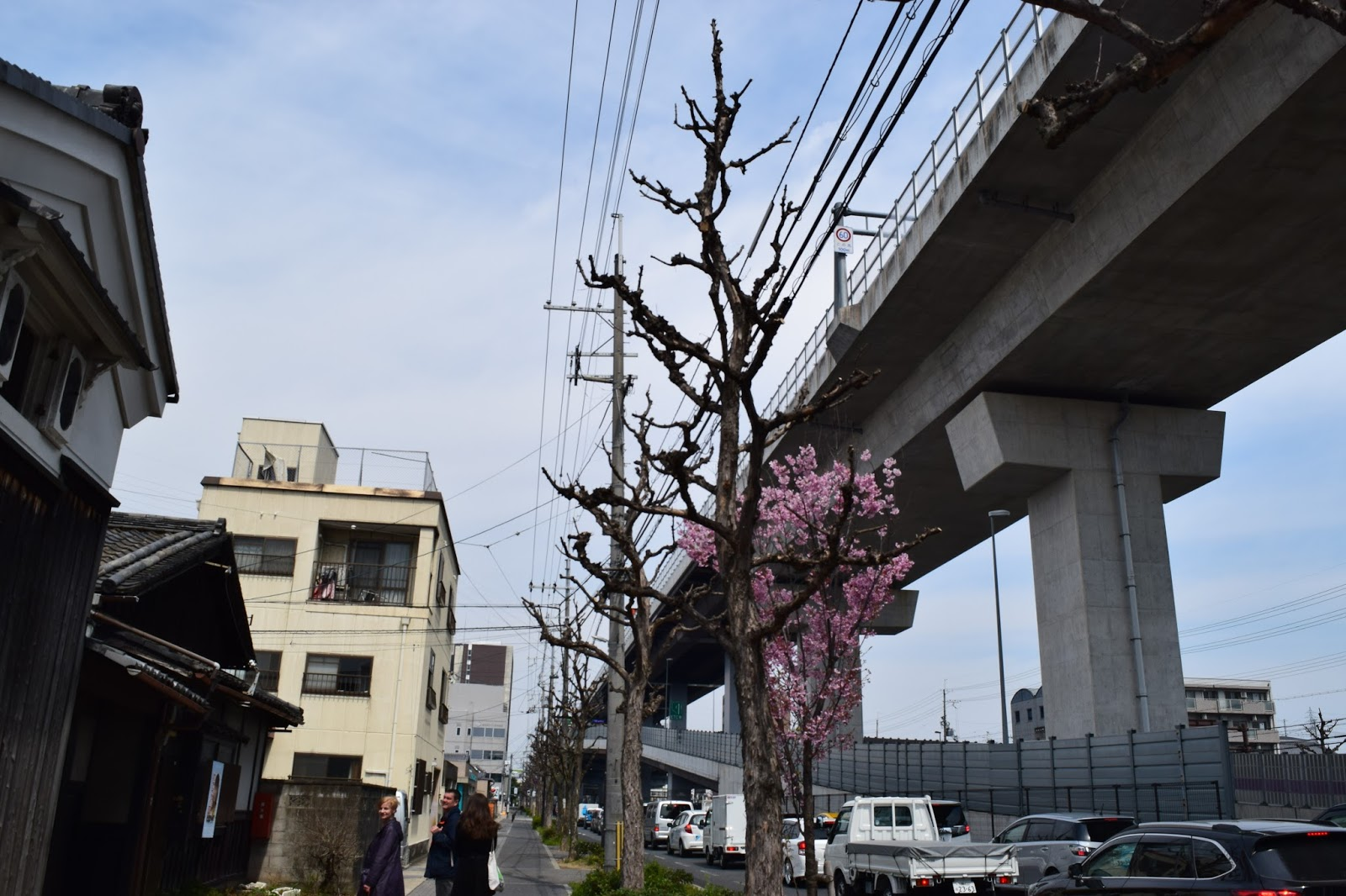 Sakura and the highway in Kyoto