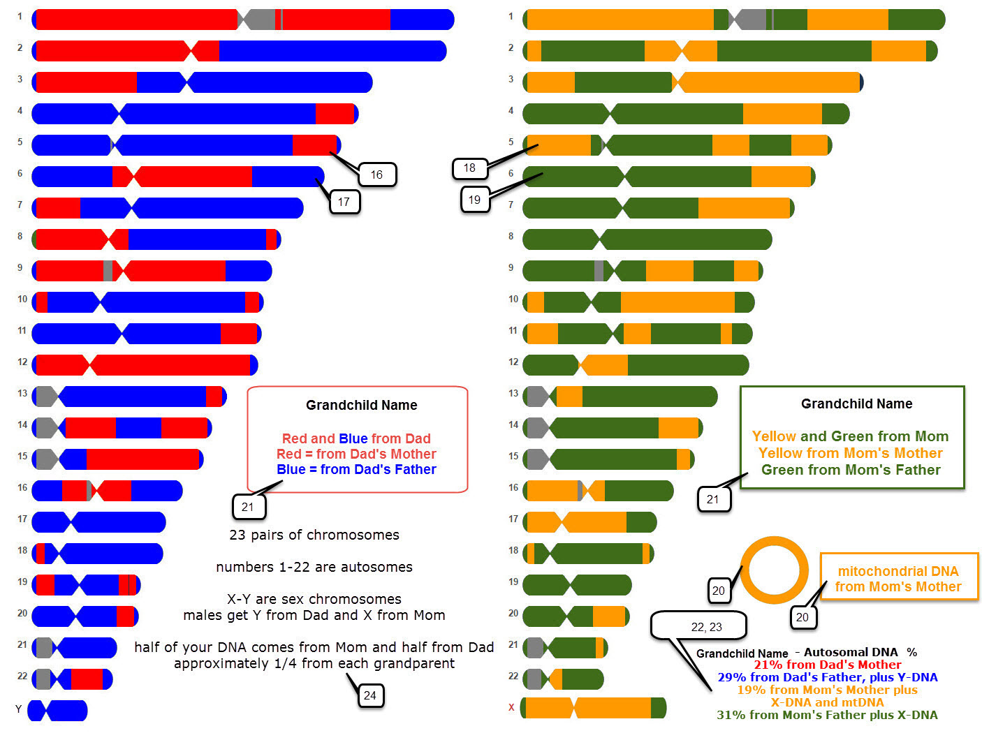 Chromosome Map Deb 39s Delvings In Genealogy Dna Chromosome Map Poster For