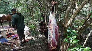 Polícia desarticula Matadouro de carnes de cavalo que seriam vendidas na Paraíba