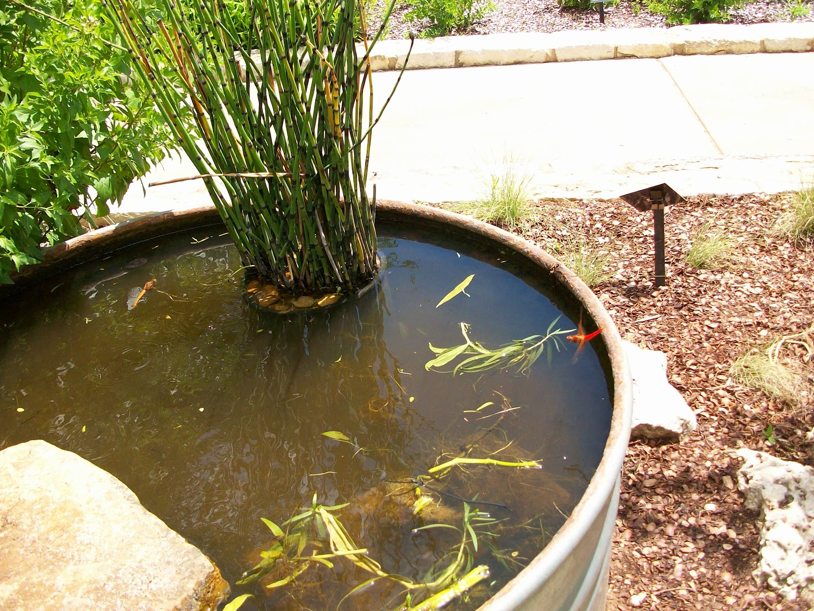 Stock tank pond ponderings
