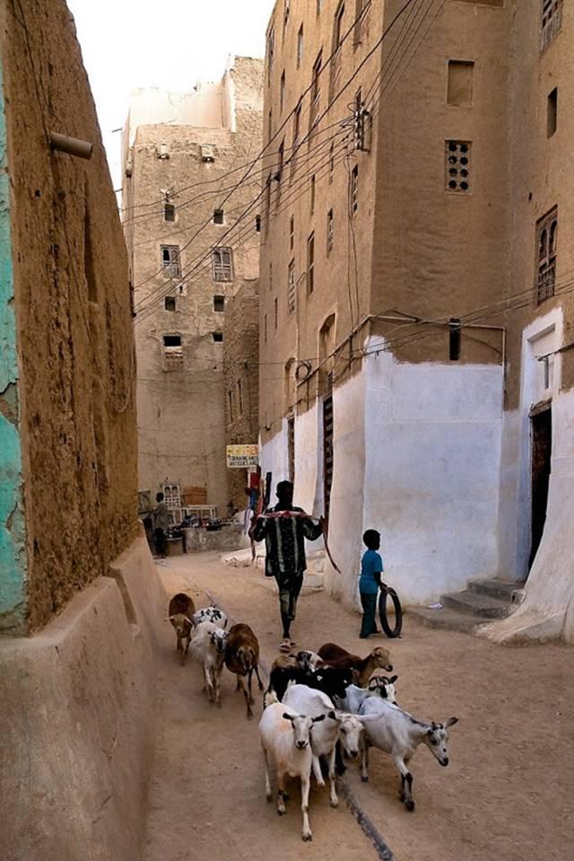 Yemen Pussy 30
