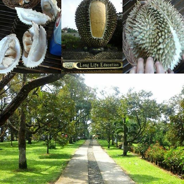 foto kebun buah durian bogor warso farm