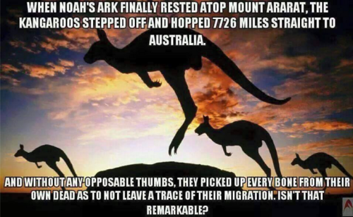 Kangaroo ark creationism picture