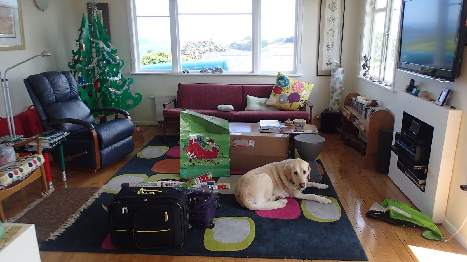 The South Island branch came up for Christmas, with retired guide dog Vincent