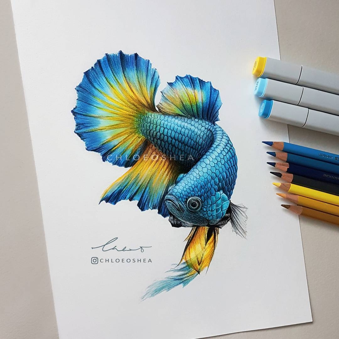 03-Betta-Siamese-Fighting-Fish-Chloe-O-Shea-Realistic-Wind-Animal-Drawings-www-designstack-co