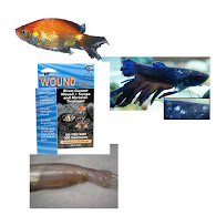 Aquarium Fish Merbromin External Columnaris-Bacterial Treatment