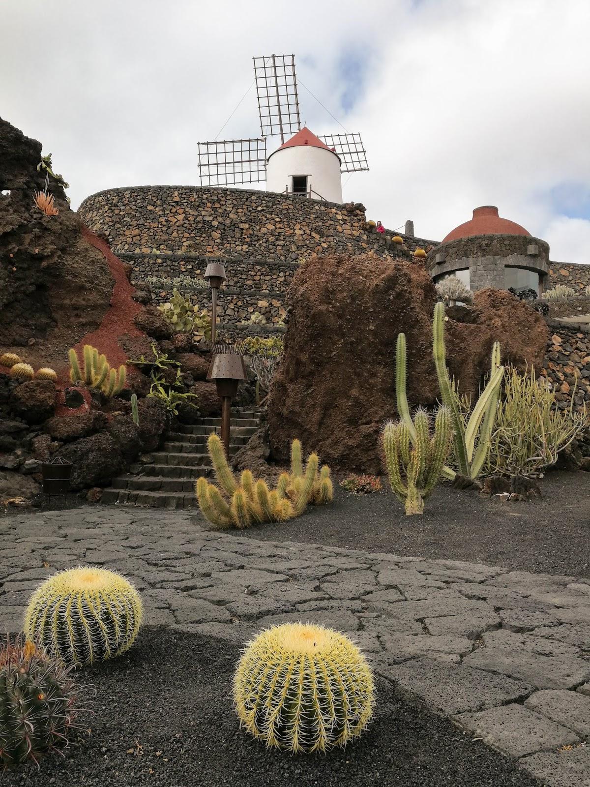 Lanzarote, Kanariansaaret, Canary Islands, Espanja, Espanja, Kaktuspuutarha, Jardin de Cactus