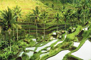 Tegalalang Rice Terrace | Sunia Bali Tour