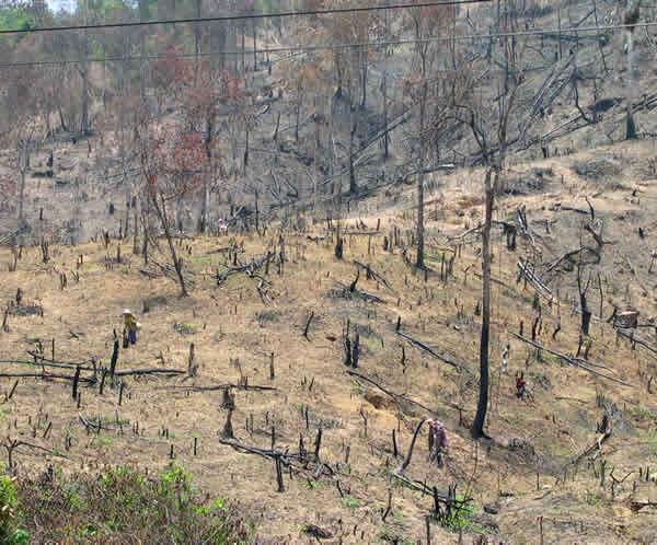 After deforestation