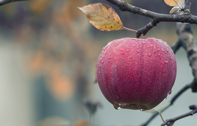 İlaç gibi meyve; Elma  | Elmanın sağlığa yararları