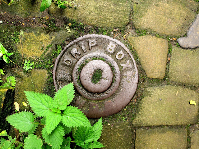 Drip box cover and nettle with other plants and mosses on a narrow stone path