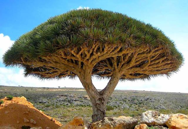 Ilha de Socotra – Iêmen