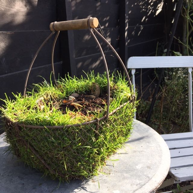 basket with Lawn turf