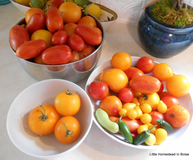 Little Homestead in Boise Tomato Harvest and Sauce Copycat Olive