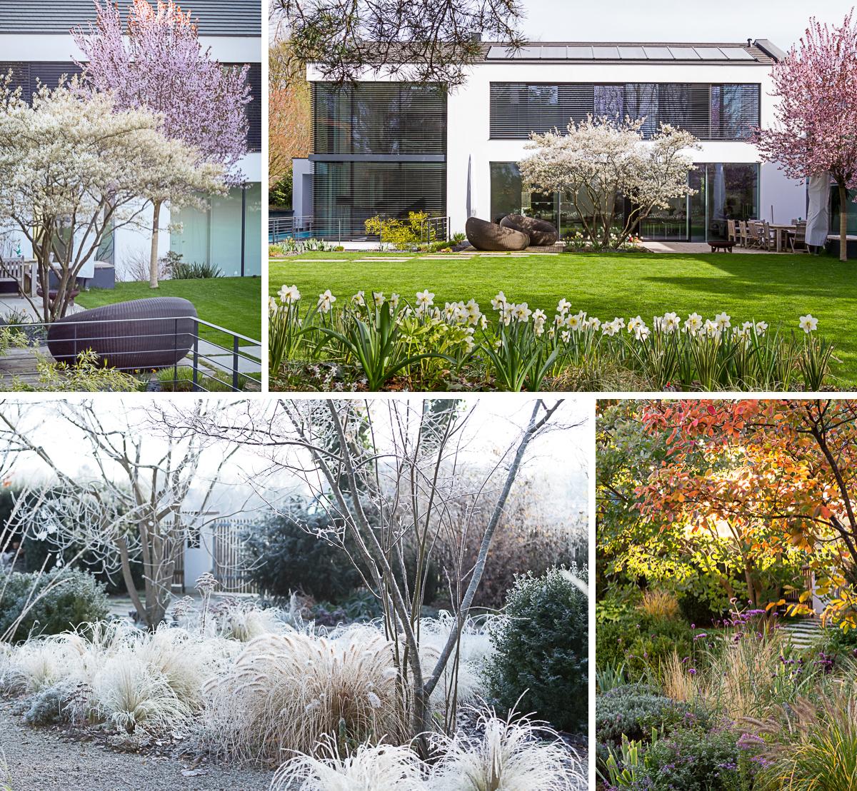 Gartenblog geniesser garten hamamelis zaubernuss - Gartenplanung munchen ...