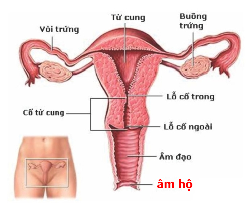 Viêm âm đạo do nhiễm nấm candida nguy hiểm-https://benhlynamkhoa115.blogspot.com/