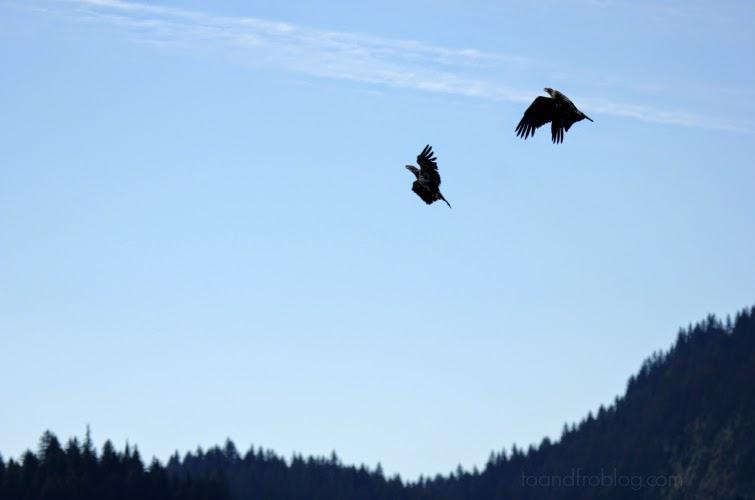 The Birds & the Bees: Alaskan Animals