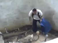 Pria Tampar Ular Kobra dengan Santainya