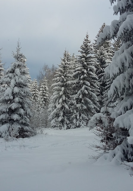 Snow - Vallée de Joux
