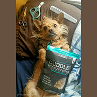 The Honest Kitchen Cuddles Dog Training Treats Review