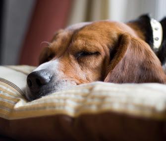 dog depression solutions