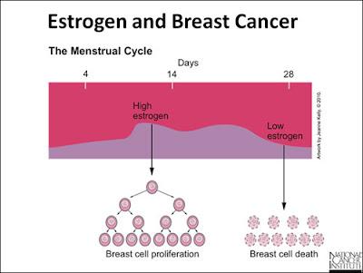 Hubungan Kanker Payudara dan Estrogen