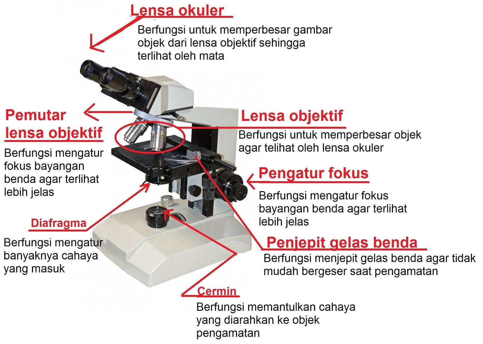 Pengertian Mikroskop Cahaya Dan Elektron Beserta Bagian Bagiannya Cakrawala Pendidikan