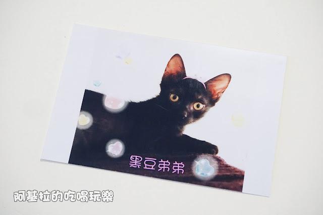 14560189 1099288320124412 3941990926802092991 o - 熱血採訪 朵貓貓咖啡館 - 貓咪餐廳
