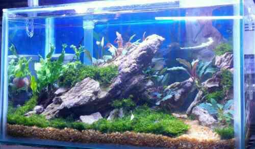Aquascape Design Art Kreasi Hani Aquarium