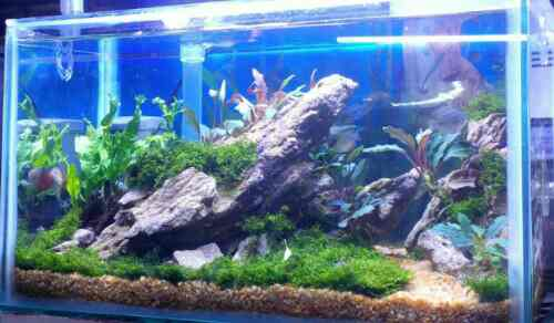 Aquascape Design Art Kreasi Hani Aquarium