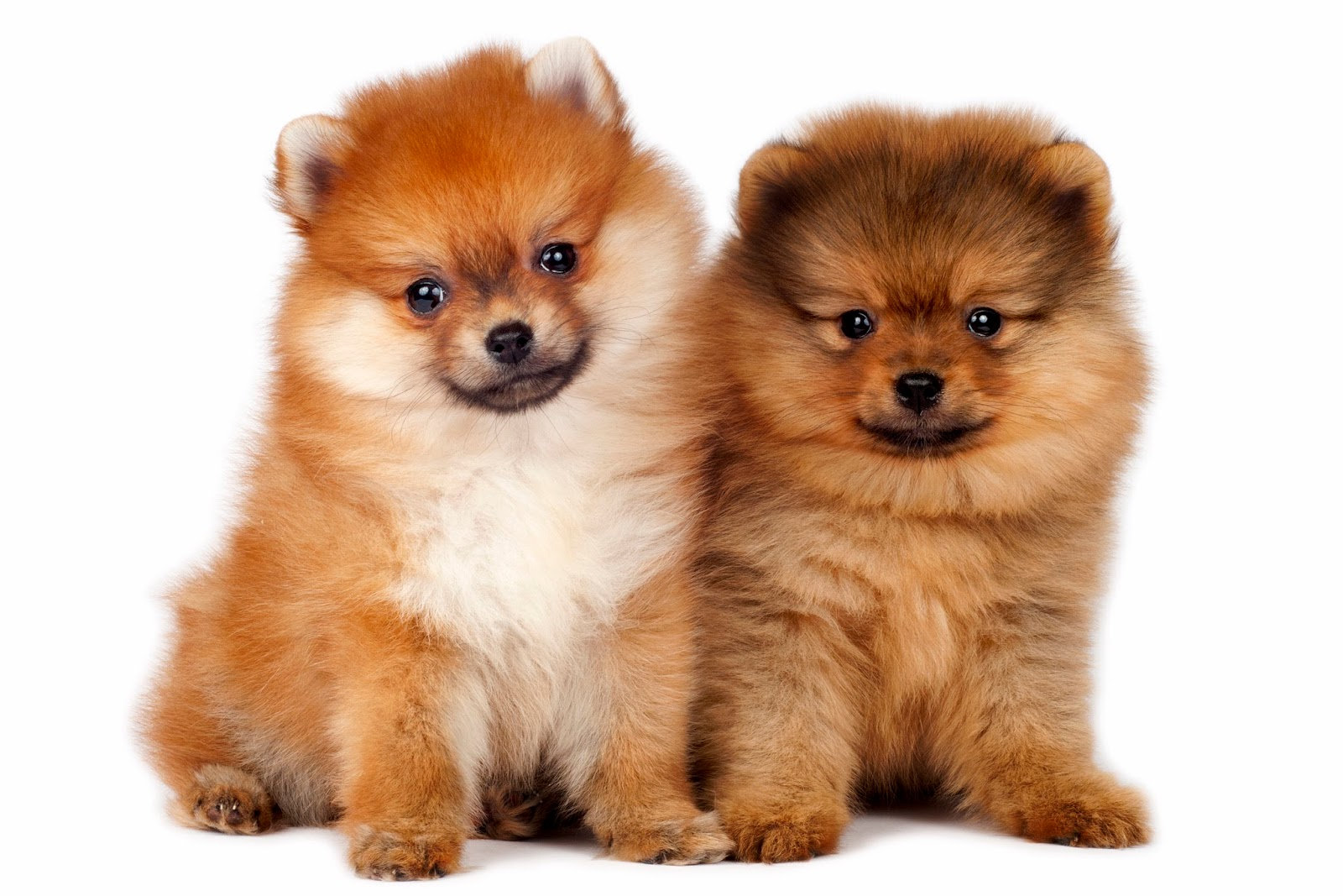 Paisajes De Animales: BANCO DE IMÁGENES: Recopilación De Imágenes Y Fotos