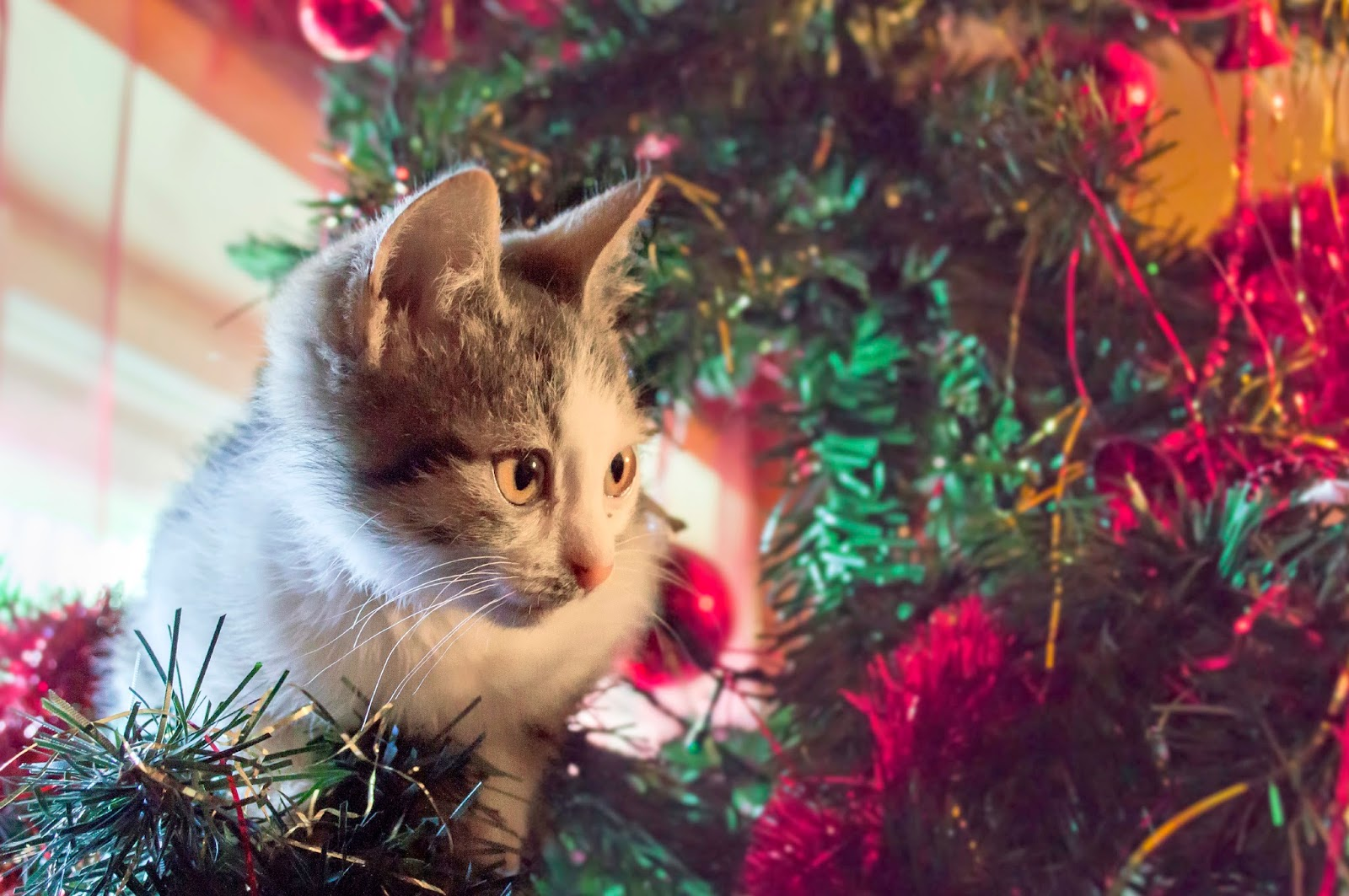 Make Sure Your Christmas Tree is Cat Proof – Bregman Vet Group