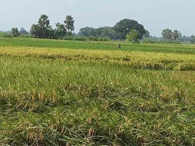 Essay on Soil of Bihar