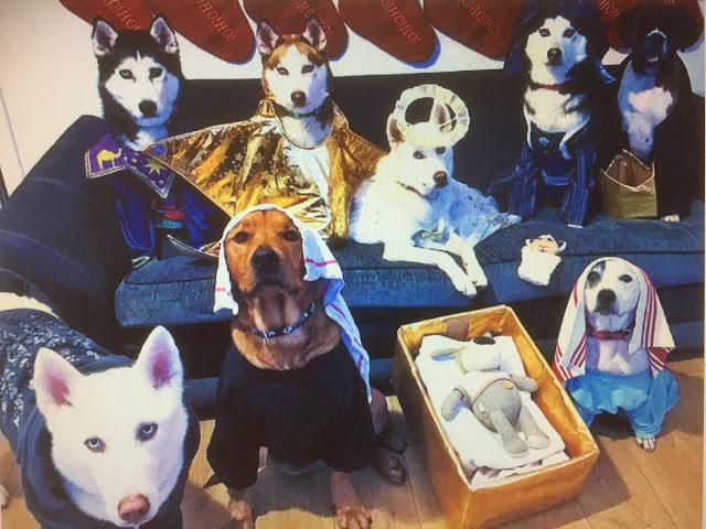 canine nativity christmas scene