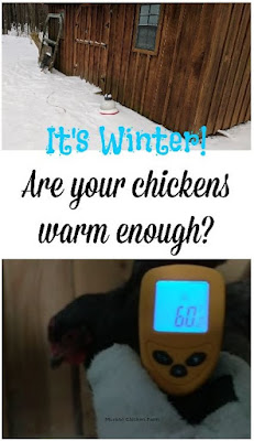 are chickens cold?