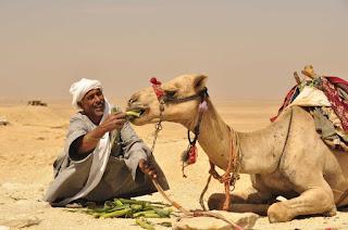 Kupranugaris ir arabas