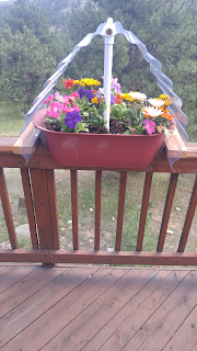 How to contain plant-eating varmints and hail on deck planters by Ed Powers