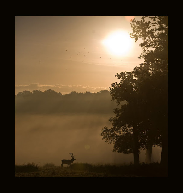 Photo taken in Richmond Park, Richmond, Greater London, UK by Mark Simms, as seen on linenandlavender.net Take me there. http://www.linenandlavender.net/p/blog-page_5.html