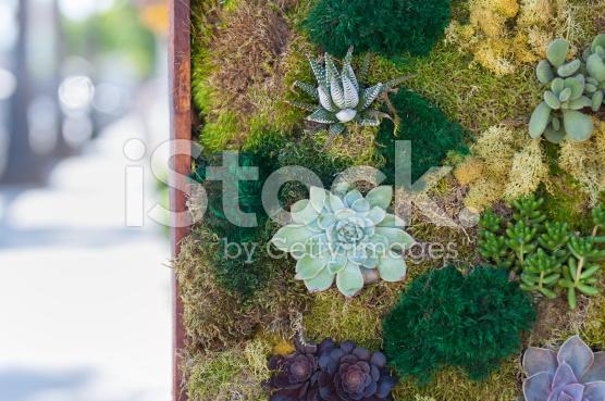 Terrrarium Vertikal Garden di terrarium-jakarta-indonesia-blogspot-com3