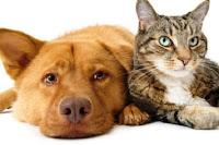 Αλλάζουν τα πάντα για τους σκύλους και τις γάτες στις πολυκατοικίες — Τι προβλέπει
