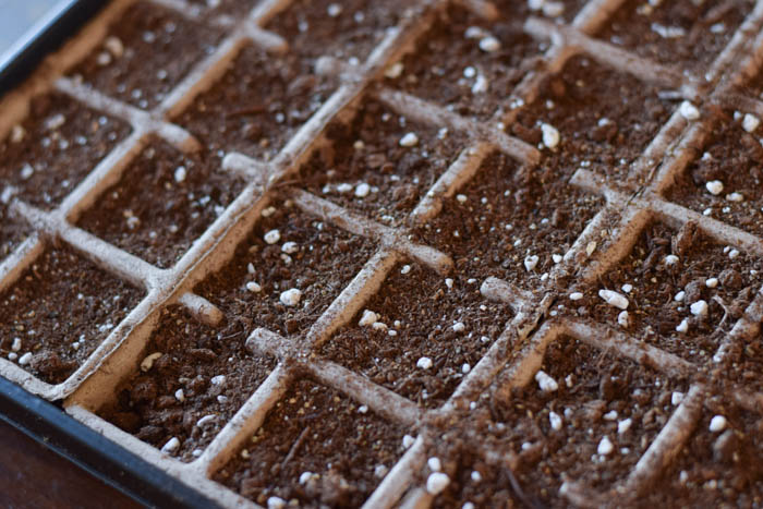 Starting seeds indoors for the garden. A great way to save money and get a start on the gardening season. Tips on how to start seeds indoors to transplant outdoors