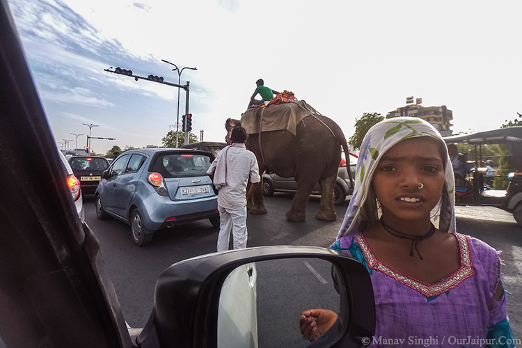 Elephant on the red light Jaipur.