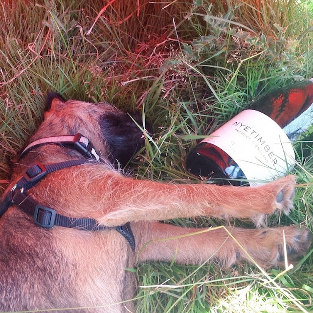 dog asleep by a champagne bottle