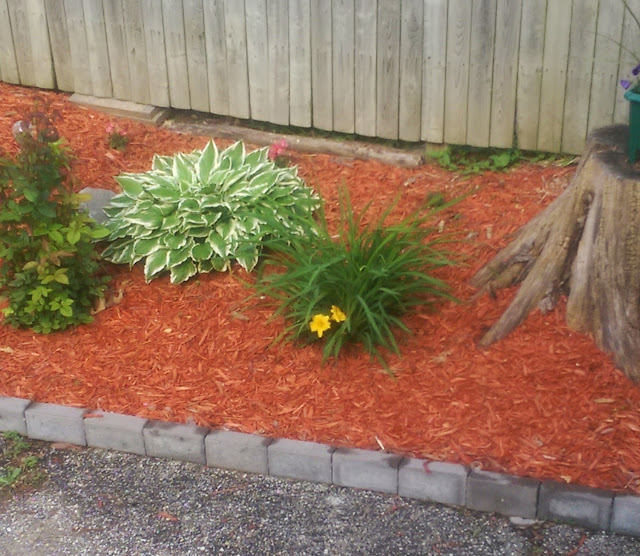 a spring garden filled with red mulch