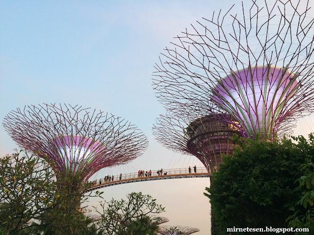 Сверхдеревья, Сингапур