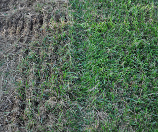Grass Pad Verticutting Grooves