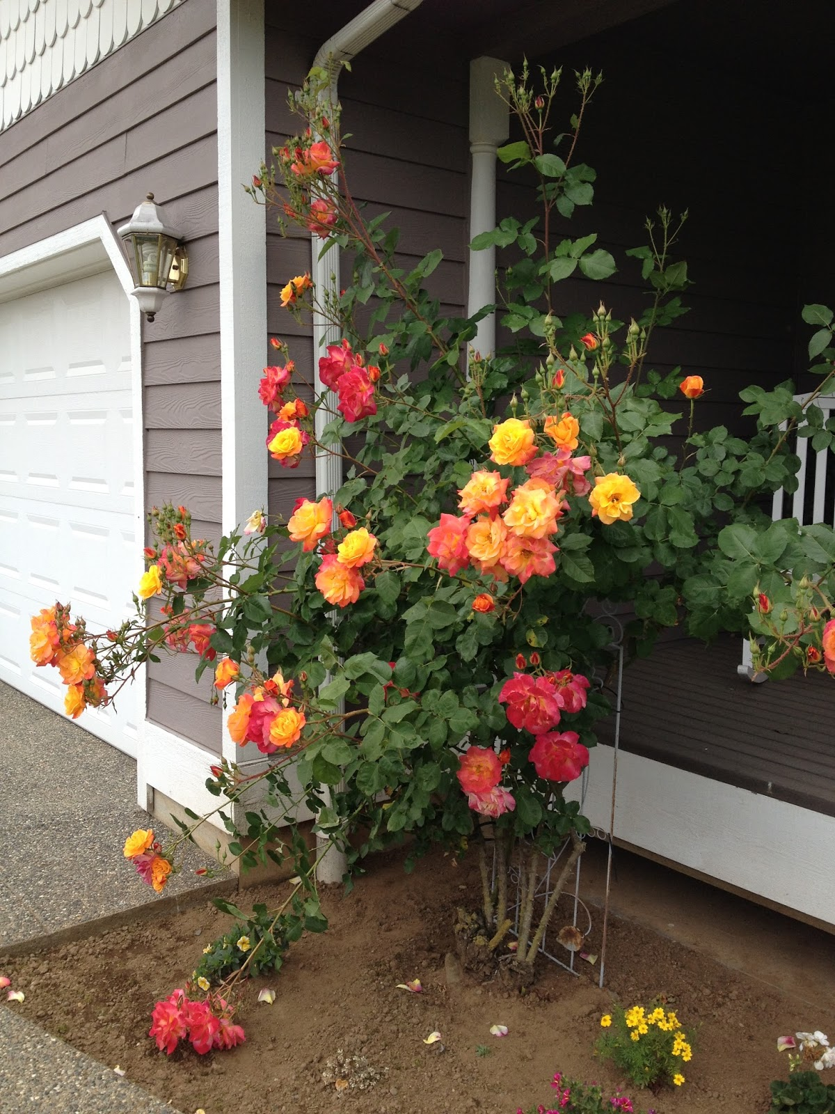 Verbosity: Big bouquets, big head...