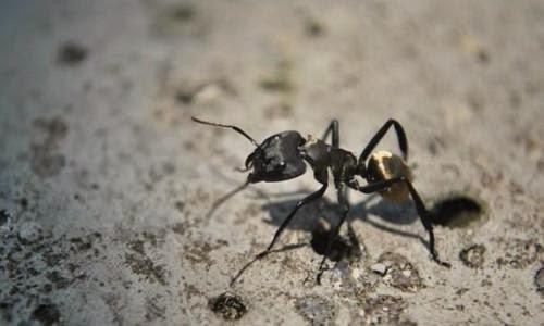 Las hormigas podrían ser claves en la captura del CO2